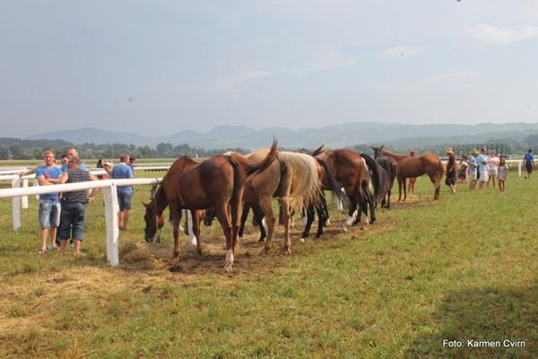 konjske_dirke_imeno_2015_2