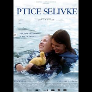 Ptice-selivke_b