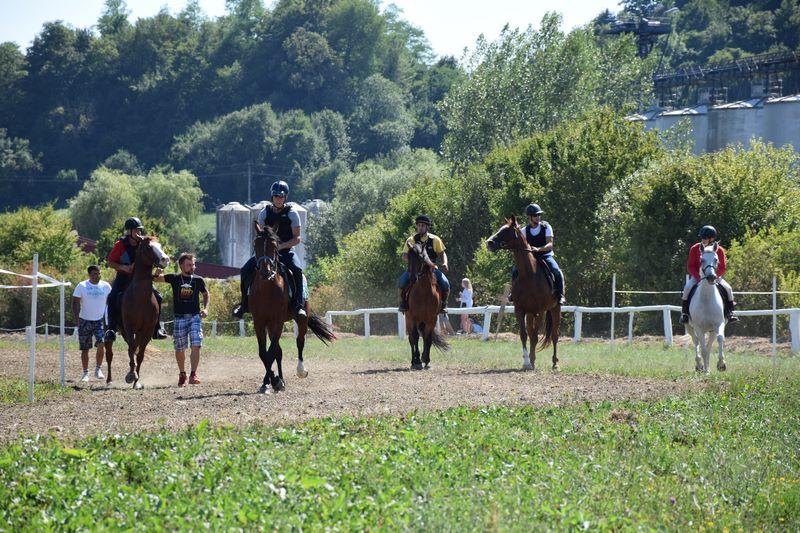 konjske_1