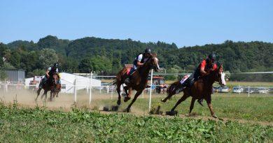 konjske_2