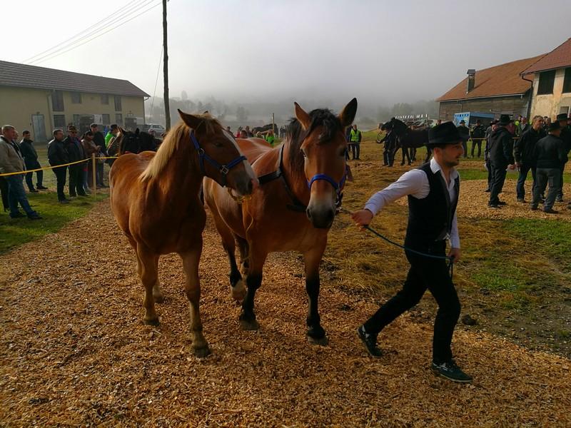 Konji so se pomerili v 9. kategorijah živali.