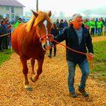 Regijska razstava konj slovenske hladnokrvne pasme na Šolskem centru Šentjur (foto, video)