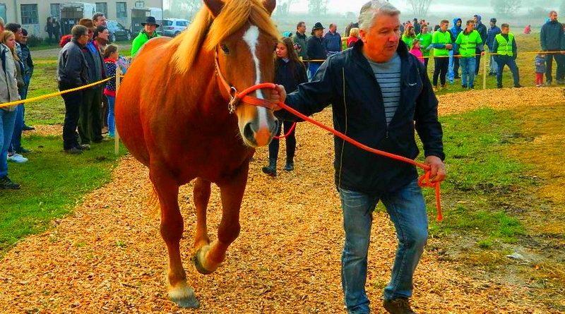 razstava-konj-23