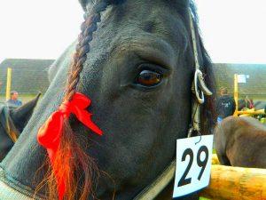 Na razstavi smo lahko videli 50 konj različnih kategorij.