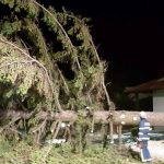 Veter podiral drevesa tudi na Kozjanskem