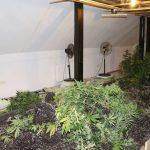 Na območju Šentjurja policisti odkrili hišo s sodobno opremljenimi prostori za gojenje marihuane