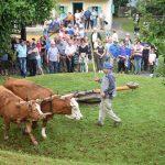 20. Likof na taberhi 2018: Rogatec ponovno v znamenju tradicije (foto)