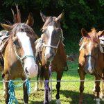 20. blagoslov konj v Gorici pri Slivnici (foto)