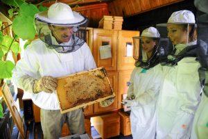 Dekleta so med drugim spoznavala tudi osnove čebelarstva.