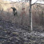 Gorelo ob gozdu, interventni posek