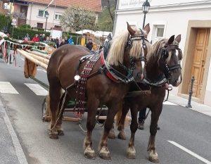 mlaj-sentjurjevo-n