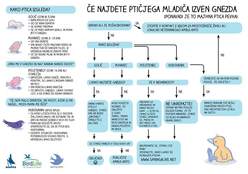 infografika_mladici