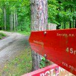 Izleti in pohodne poti v Celjski regiji in okolici: naj planinska pot je Rečiška planinska krožna pot