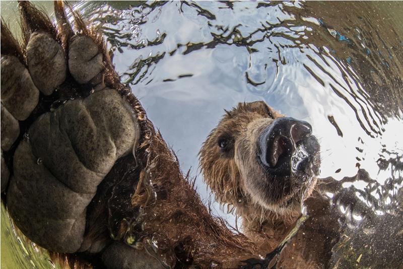 bear-natura