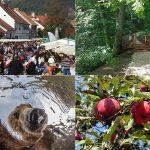 V Kozjanskem parku pred vrati pestra jesen (Praznik kozjanskega jabolka, biosferno območje KiO, letni kino na prostem,…)