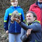 Sove – reševanje in vračanje v naravo (foto)
