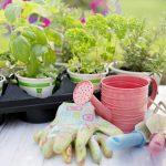 V Vrtnarstvu Valner lahko vse vrste sadik naročite tudi preko spletnega obrazca
