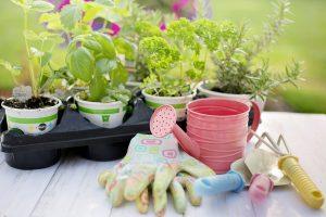 planting-4226838_1280