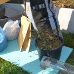 Policisti na območju Šentjurja zasegli več kilogramov konoplje (foto)