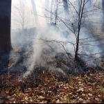 Požar podrasti na težko dostopnem terenu na Resevni (foto)