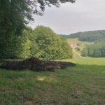 Črno odlagališče komunalnega blata odkrili tudi v Podčetrtku