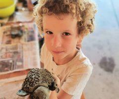 Tibor je izdelal želvo iz gline