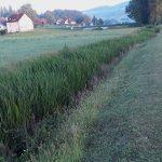 Šmarski potok je že dlje časa zaraščen. Kdaj bo urejen?